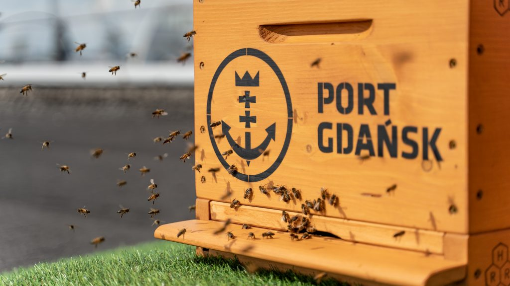 Honey bees make Port of Gdańsk their home – four beehives installed on the Westerplatte Ferry Terminal rooftop